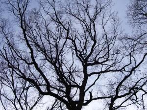 Arbor scientiarum